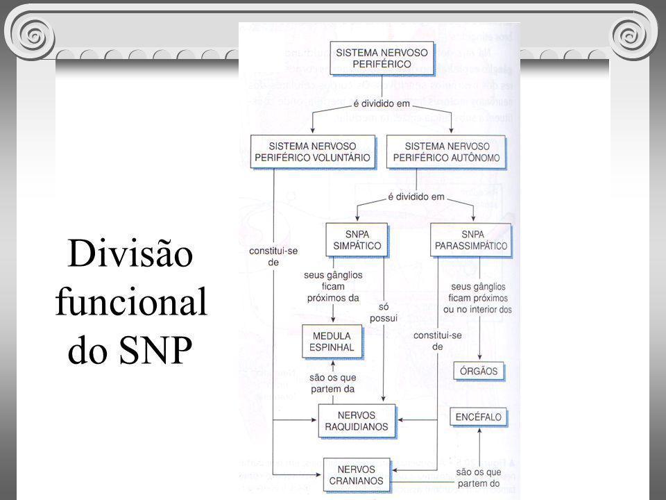 Divisão funcional do SNP