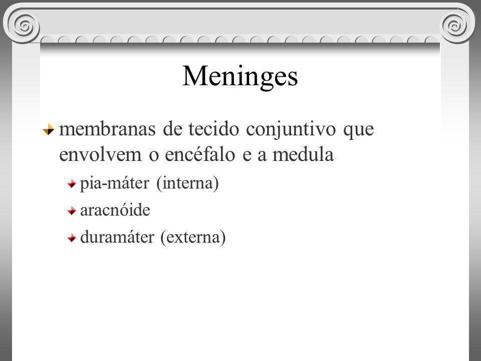 Meninges membranas de tecido conjuntivo que envolvem o encéfalo e a medula pia-máter (interna) aracnóide duramáter (externa)