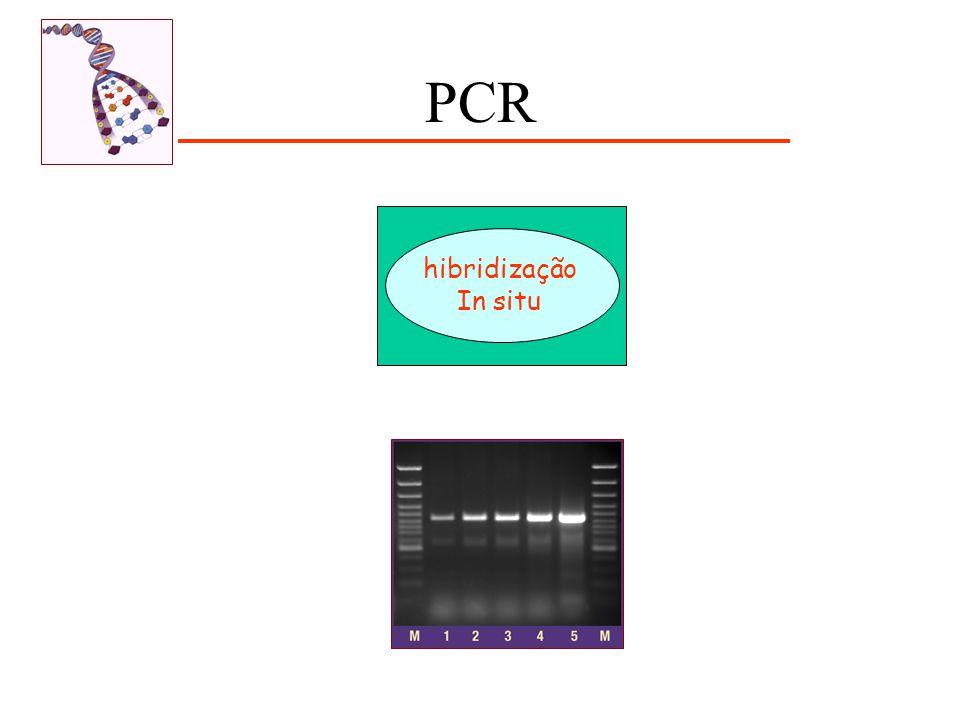 hibridização In situ PCR