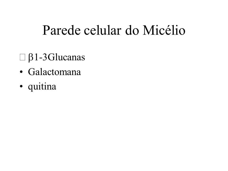 Parede celular do Micélio 1-3Glucanas Galactomana quitina