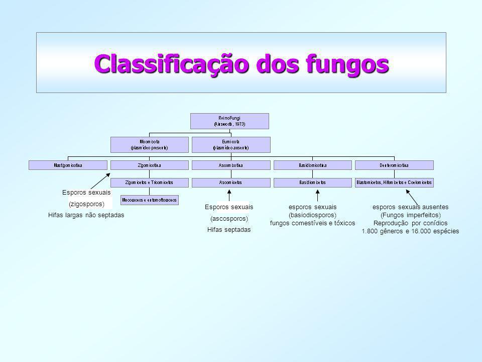 Classificação dos fungos esporos sexuais (basiodiosporos) fungos comestíveis e tóxicos esporos sexuais ausentes (Fungos imperfeitos) Reprodução por co