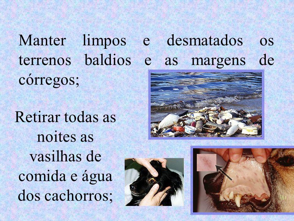 Manter limpos e desmatados os terrenos baldios e as margens de córregos; Retirar todas as noites as vasilhas de comida e água dos cachorros;