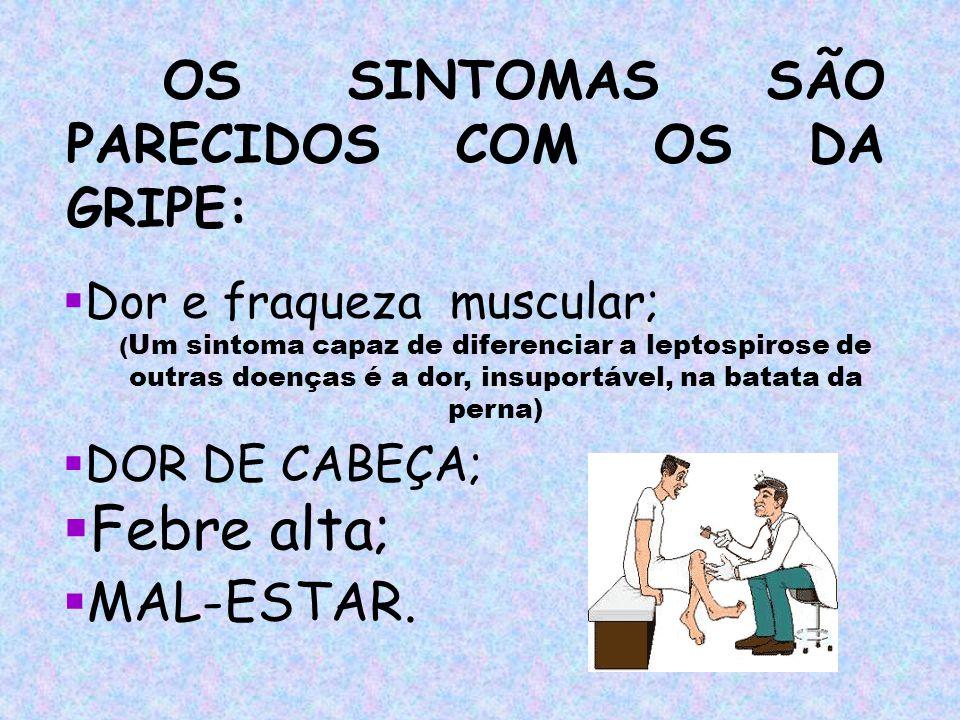 OS SINTOMAS SÃO PARECIDOS COM OS DA GRIPE: DOR DE CABEÇA; Dor e fraqueza muscular; Febre alta; MAL-ESTAR. ( Um sintoma capaz de diferenciar a leptospi