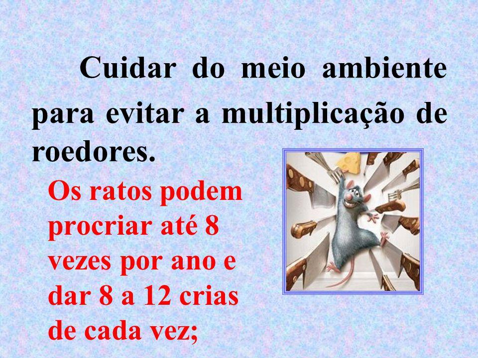 Cuidar do meio ambiente para evitar a multiplicação de roedores. Os ratos podem procriar até 8 vezes por ano e dar 8 a 12 crias de cada vez;