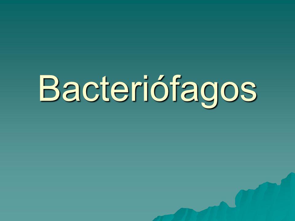 Hepatite tipo B Infecção do fígado e sangue Infecção do fígado e sangue Transmissão vertical Transmissão vertical É caracterizada por fraqueza, náuseas, vômito, desconforto abdominal, febre e icterícia É caracterizada por fraqueza, náuseas, vômito, desconforto abdominal, febre e icterícia Em alguns pacientes o vírus persiste no organismo por alguns anos Em alguns pacientes o vírus persiste no organismo por alguns anos