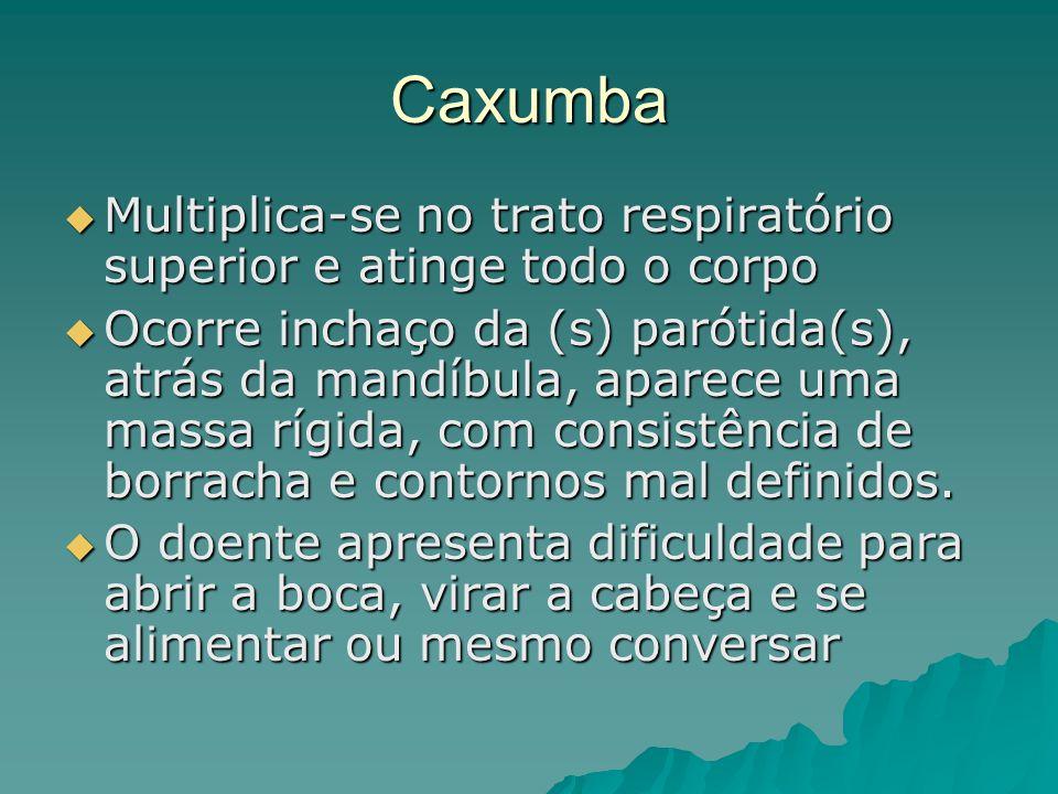 Caxumba Multiplica-se no trato respiratório superior e atinge todo o corpo Multiplica-se no trato respiratório superior e atinge todo o corpo Ocorre i
