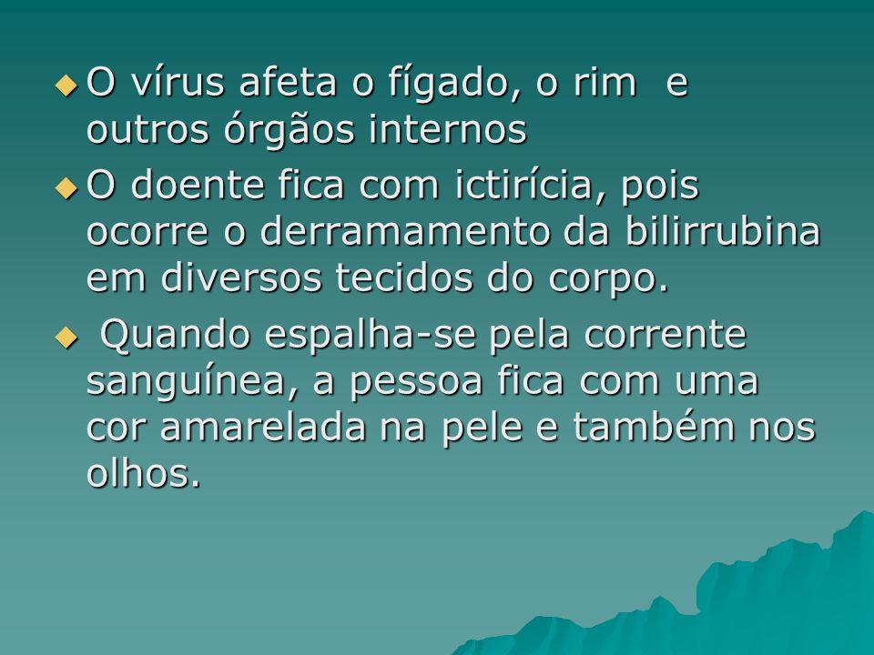 O vírus afeta o fígado, o rim e outros órgãos internos O vírus afeta o fígado, o rim e outros órgãos internos O doente fica com ictirícia, pois ocorre