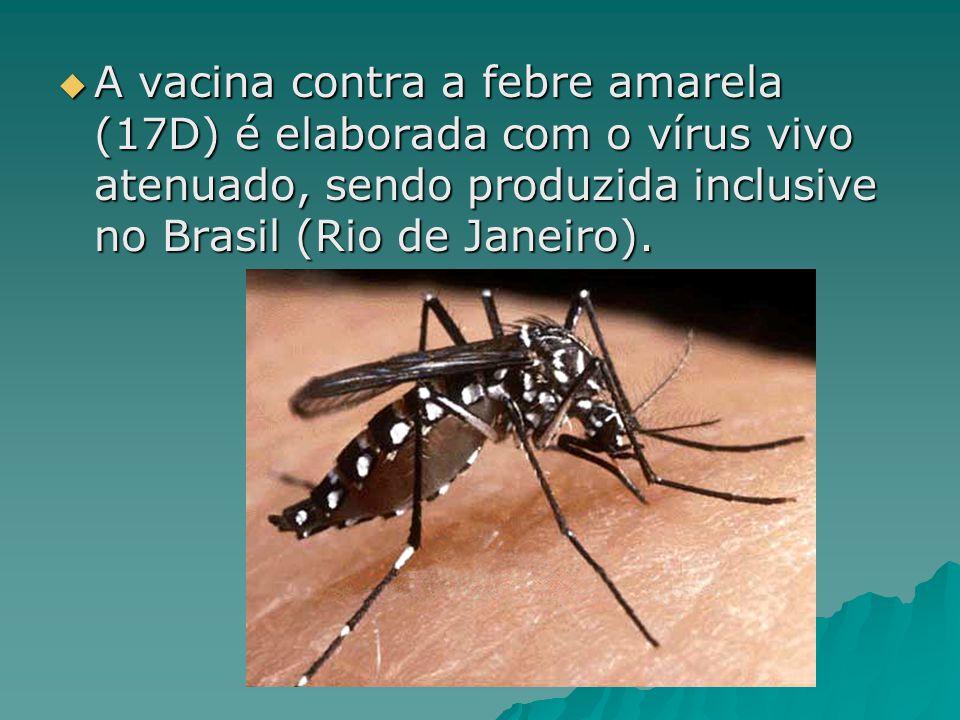 A vacina contra a febre amarela (17D) é elaborada com o vírus vivo atenuado, sendo produzida inclusive no Brasil (Rio de Janeiro). A vacina contra a f