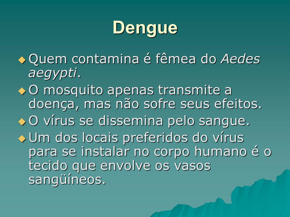 Dengue Quem contamina é fêmea do Aedes aegypti. Quem contamina é fêmea do Aedes aegypti. O mosquito apenas transmite a doença, mas não sofre seus efei