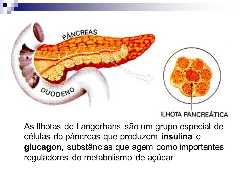 As Ilhotas de Langerhans são um grupo especial de células do pâncreas que produzem insulina e glucagon, substâncias que agem como importantes regulado