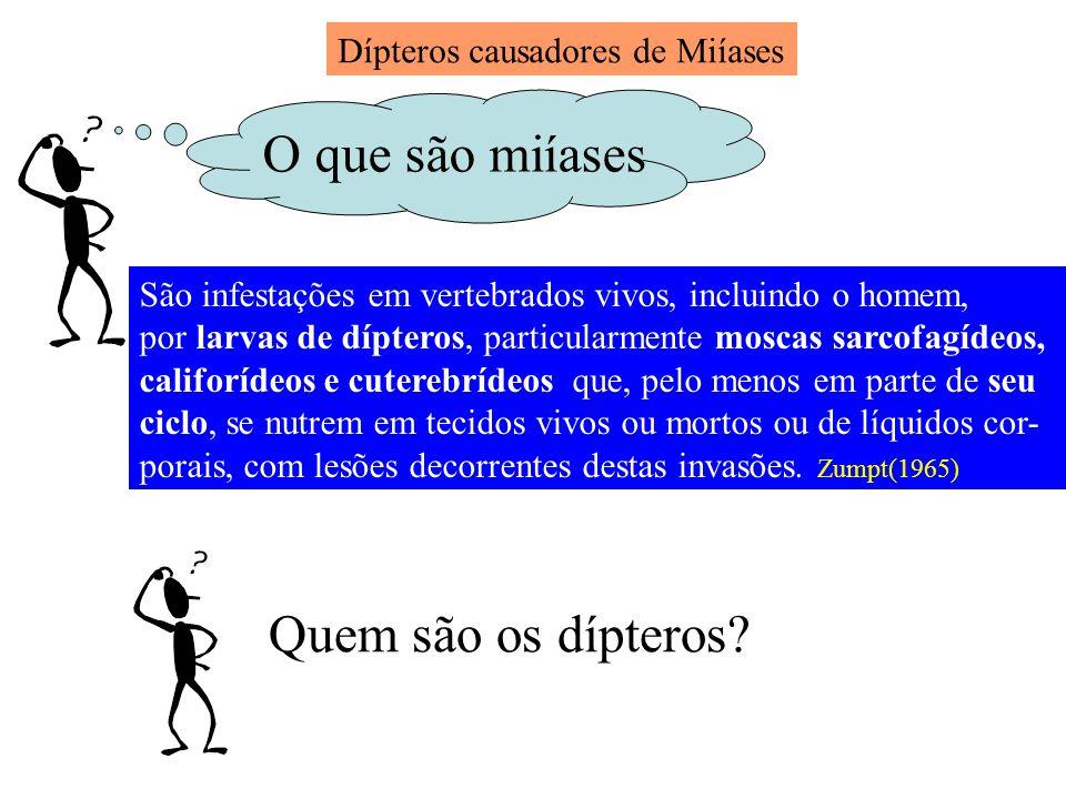 Dípteros causadores de Miíases O que são miíases São infestações em vertebrados vivos, incluindo o homem, por larvas de dípteros, particularmente mosc