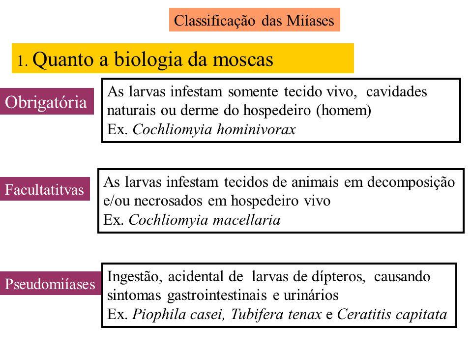 Classificação das Miíases 1. Quanto a biologia da moscas Obrigatória As larvas infestam somente tecido vivo, cavidades naturais ou derme do hospedeiro