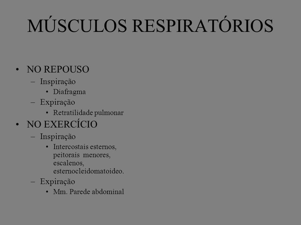 MÚSCULOS RESPIRATÓRIOS NO REPOUSO –Inspiração Diafragma –Expiração Retratilidade pulmonar NO EXERCÍCIO –Inspiração Intercostais esternos, peitorais me