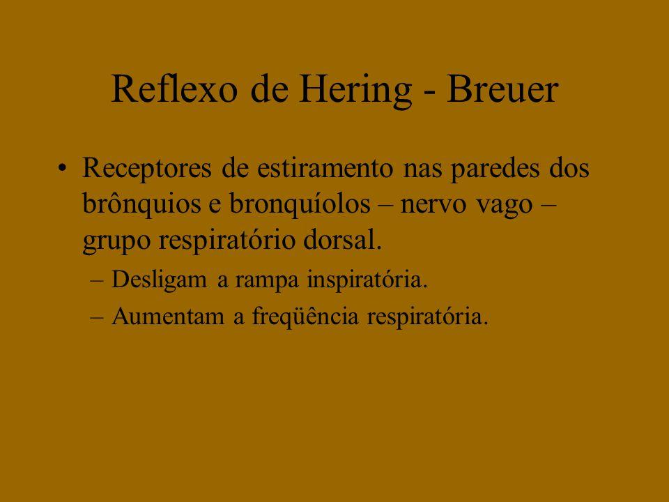 Receptores de estiramento nas paredes dos brônquios e bronquíolos – nervo vago – grupo respiratório dorsal. –Desligam a rampa inspiratória. –Aumentam