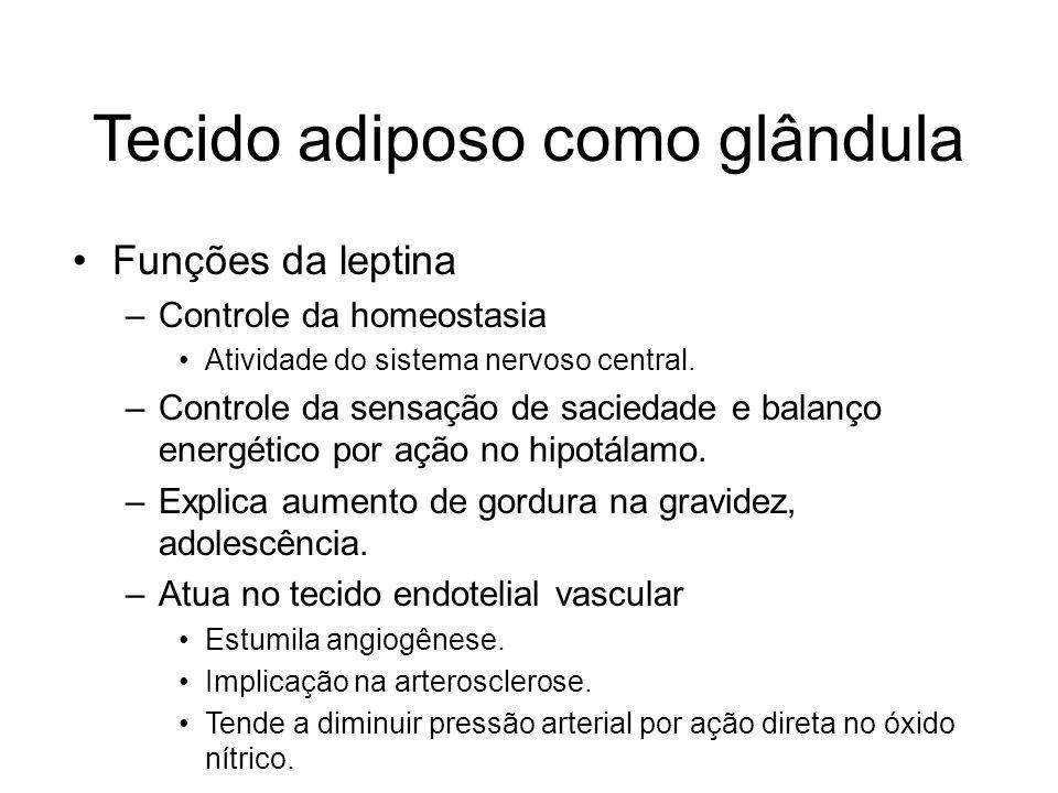 Tecido adiposo como glândula Funções da leptina –Controle da homeostasia Atividade do sistema nervoso central. –Controle da sensação de saciedade e ba