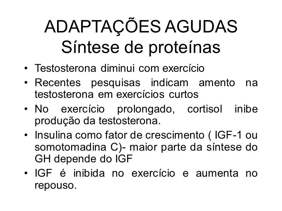 ADAPTAÇÕES AGUDAS Síntese de proteínas Testosterona diminui com exercício Recentes pesquisas indicam amento na testosterona em exercícios curtos No ex