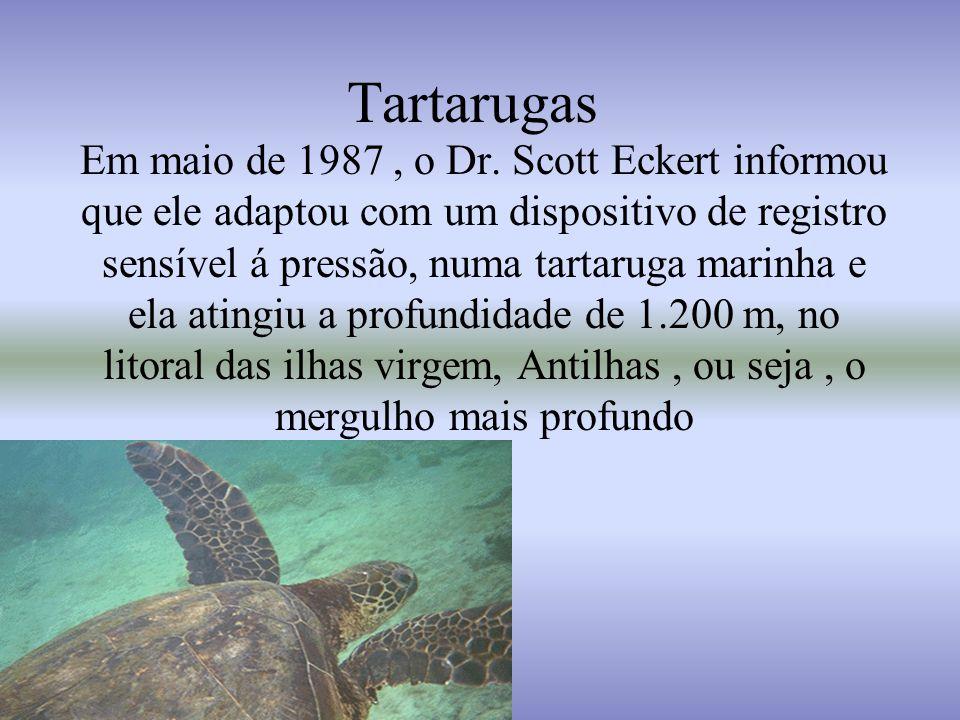 Ataque dos tubarões Os tubarões atacam os surfistas, pensando que são tartarugas.