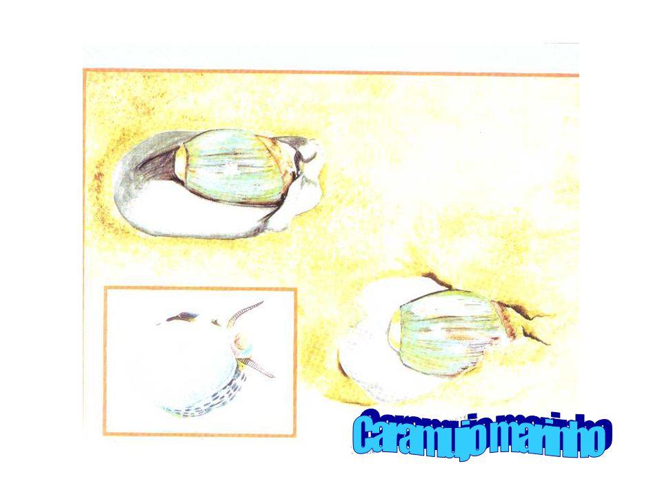 O caramujo marinho As conchinhas são feitas por animais marinhos. O caramujo marinho pertence ao grupo de moluscos. Aquelas conchas que são torcidas e