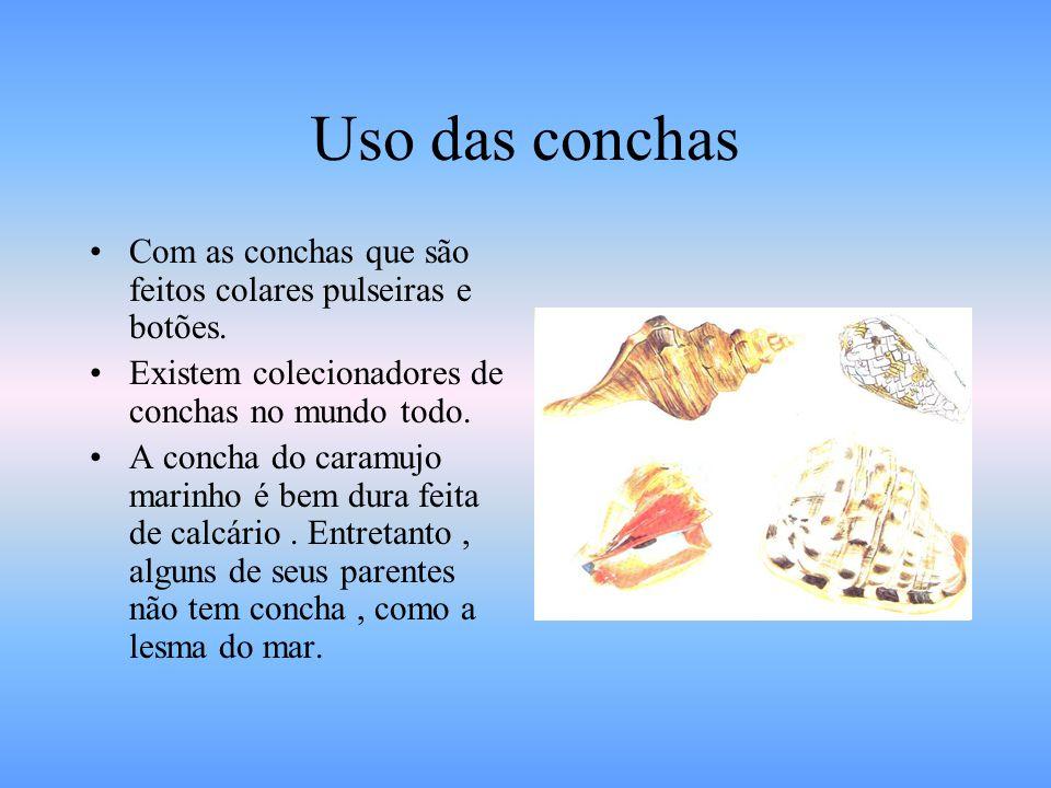 Caramujo O caramujo marinho possui em pé bastante grande e achatado, lembrando a sola de um sapato. Eles usa o pé para se enterrar na areia ou então p