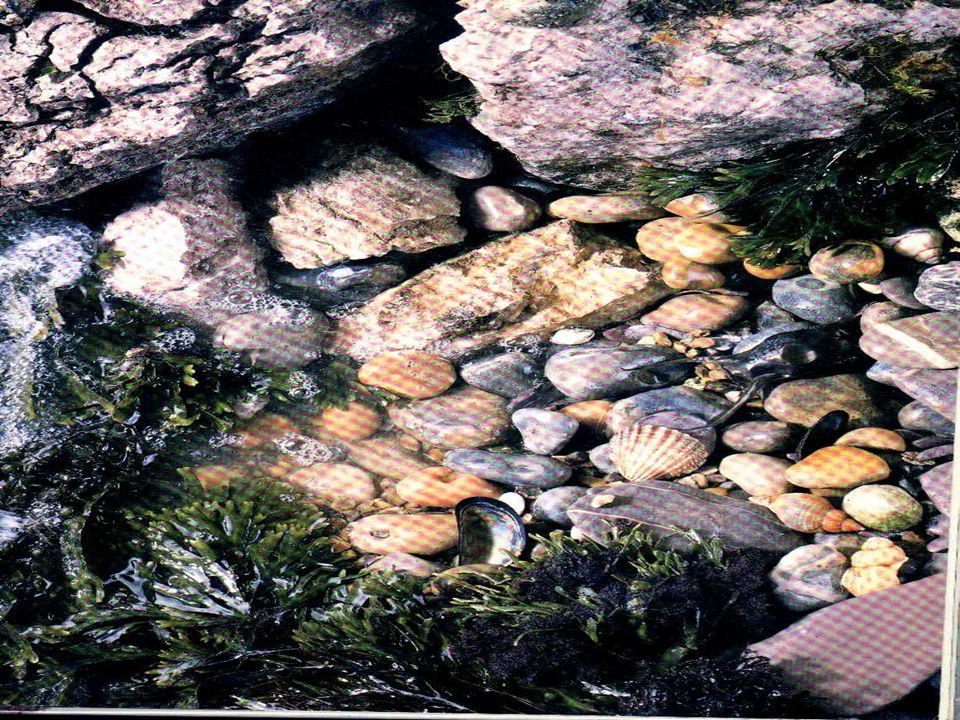 Poesia da estrela do mar S ão cinco pontas cinco destinos areias tontas de desatinos cinco sentidos cinco caminhos grãos tão moídos marés moinhos estr