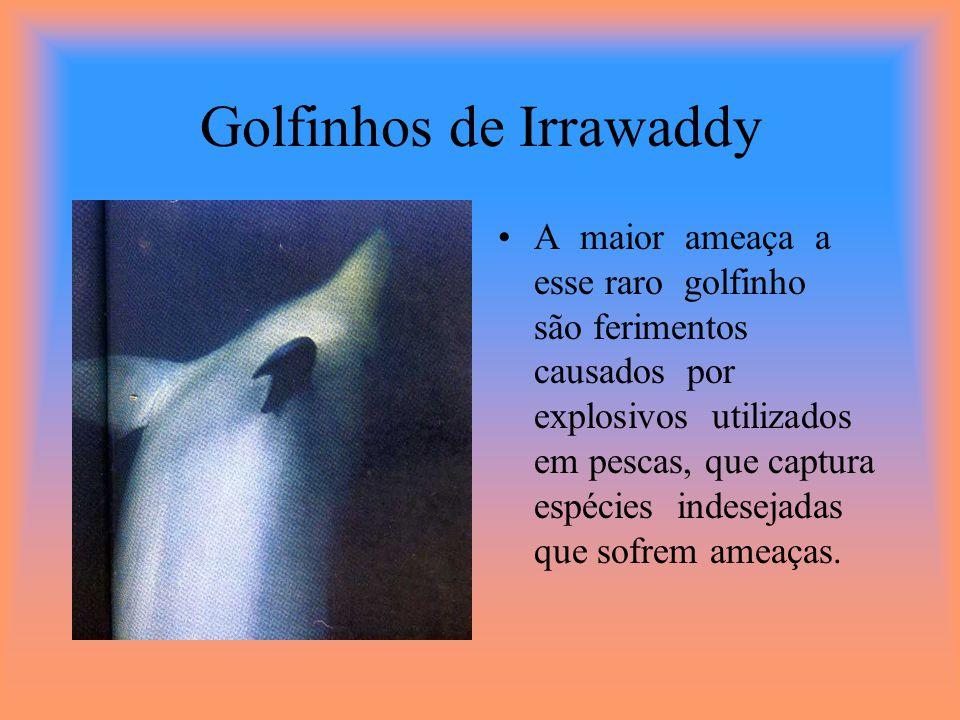 Golfinhos-nariz -de-garrafa Deslizam com graça pela sombra ondeada de um pico montanhoso.