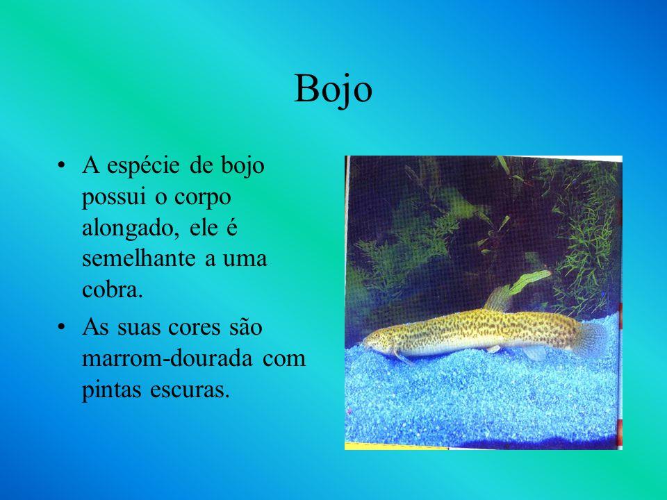 Barbo T O Barbo T recebe este nome por apresentar o corpo com duas listras pretas verticais e uma horizontal que forma um desenho t. Ele chega 16cm na