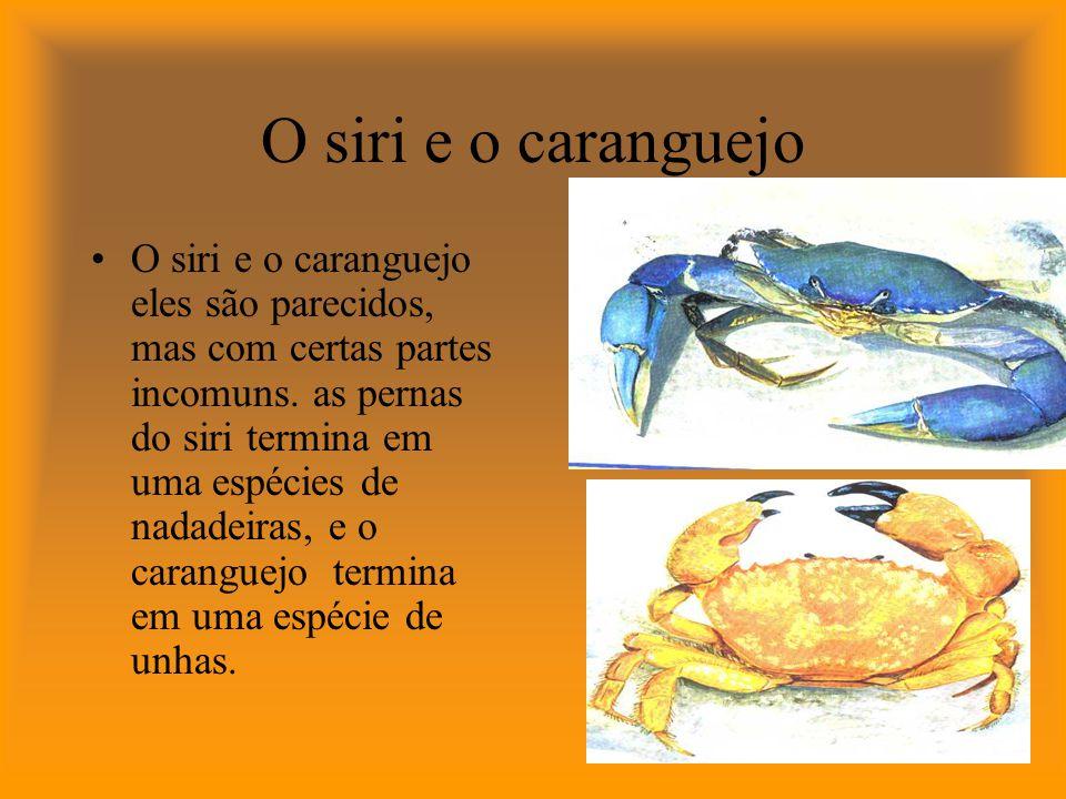 O siri e o caranguejo são carnívoros.Podem comer animais vivos e mortos.
