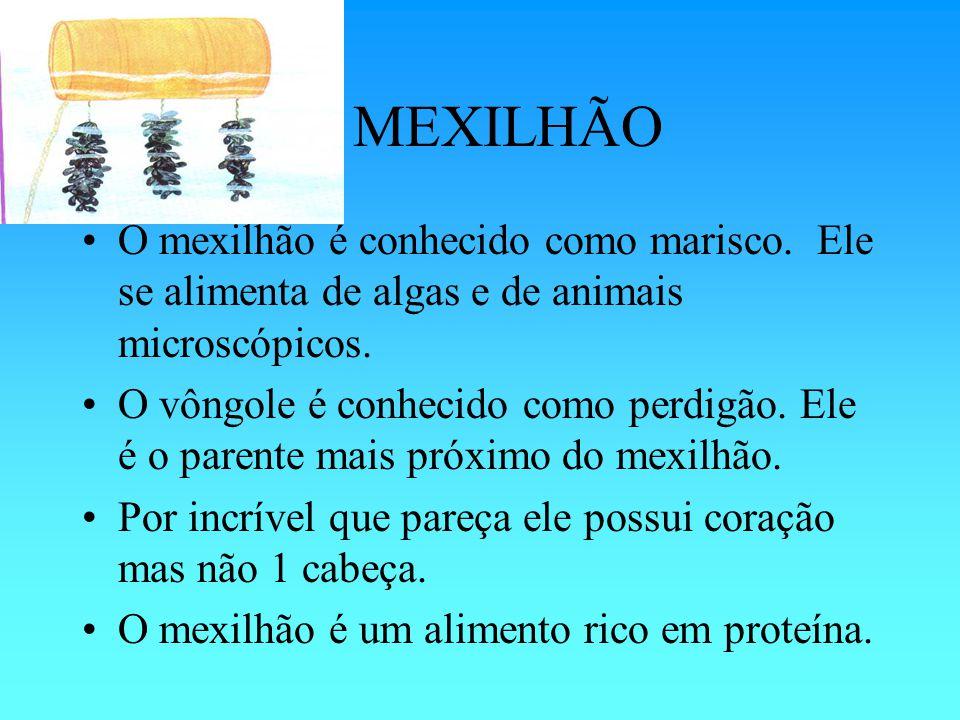 O MEXILHÃO O mexilhão é conhecido como marisco.