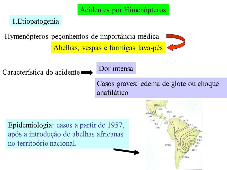 Aparelho de veneno Aminas biogênicas: bradicinina e histaminas Peptídeos: aminas Enzimas: fosfolipases e hialuronidases Composição da peçonha Uma mistura complexa de :