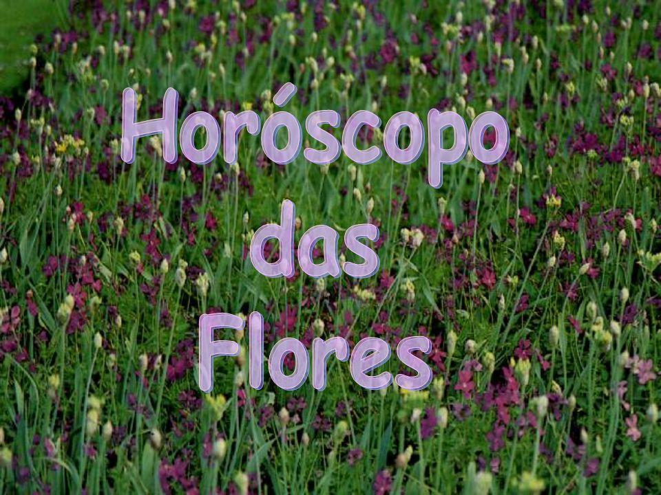 CAMPAINHA-IMPERIAL (de 6/1 a 2/2 ) Com delicadas flores em forma de taça, essa planta se desenvolve muito bem em temperaturas amenas e em lugares ensolarados, além de se adaptar a qualquer tipo de solo.