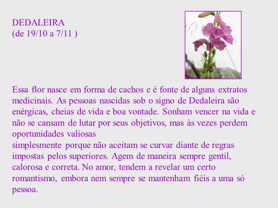 DEDALEIRA (de 19/10 a 7/11 ) Essa flor nasce em forma de cachos e é fonte de alguns extratos medicinais. As pessoas nascidas sob o signo de Dedaleira