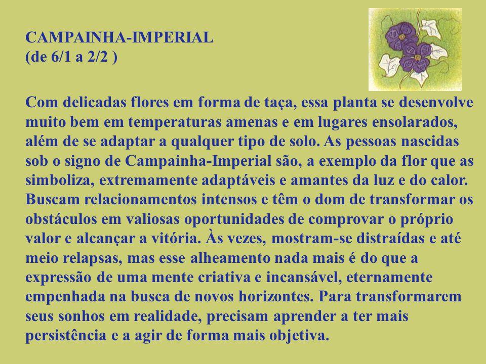 CRISÂNTEMO (de 24/9 a 18/10 ) A justiça e a nobreza de caráter são os atributos associados a essa flor, cuja origem se perde no tempo.