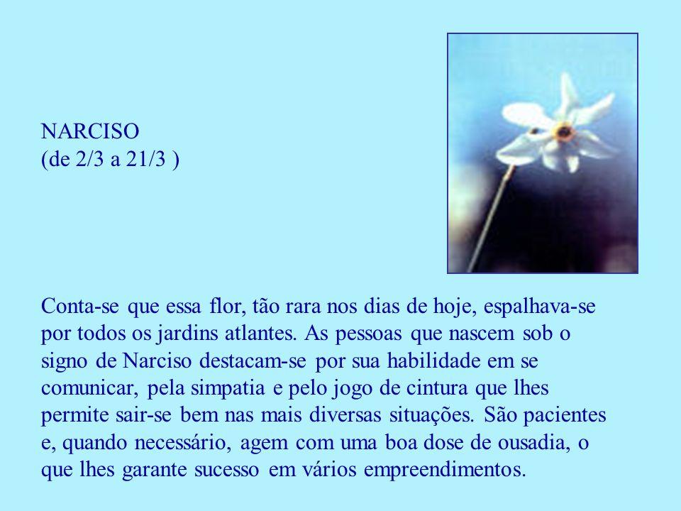 NARCISO (de 2/3 a 21/3 ) Conta-se que essa flor, tão rara nos dias de hoje, espalhava-se por todos os jardins atlantes. As pessoas que nascem sob o si