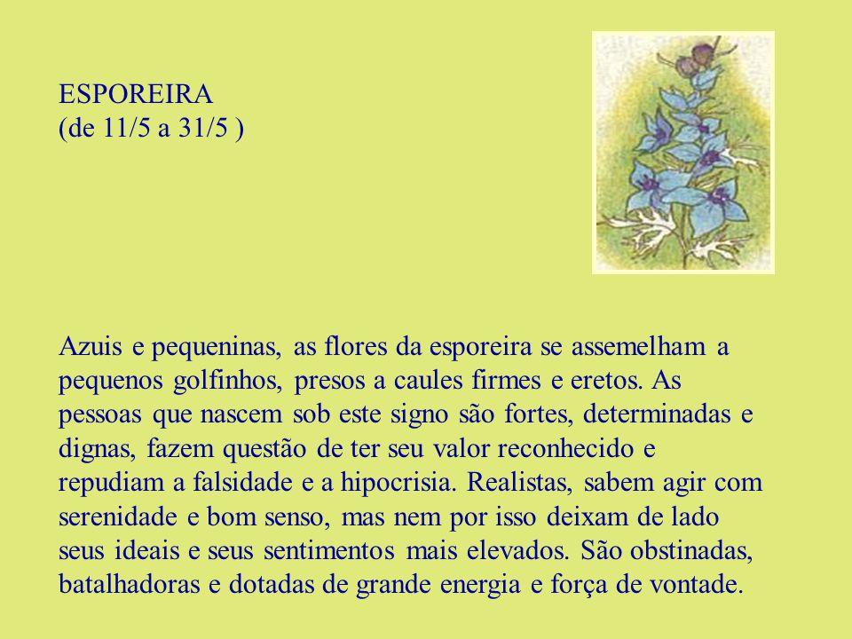 FLOR-DE-MARACUJÁ (de 1/6 a 23/6 ) Para os atlantes, essa flor é o símbolo da dualidade da natureza.
