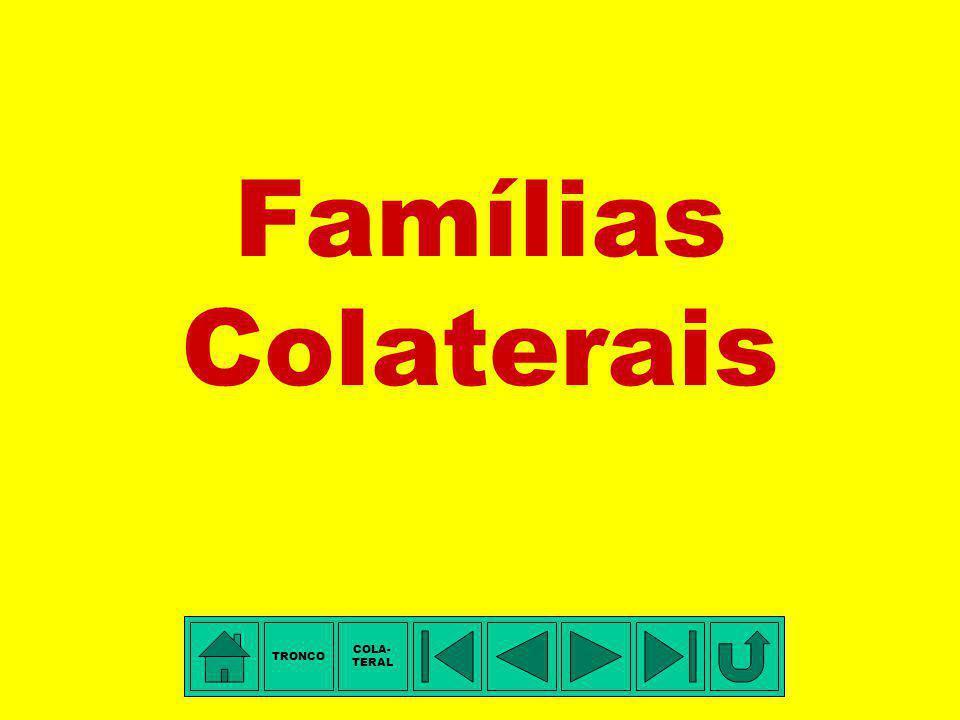 TÁBUA DE PARENTESCO: 1.Francisca Vilella da Silva - tetravó 2.Rosa Michaela de Jesus (Vilella) - trisavó 4.Leopoldina Electo de Souza (Lifa) - avó 5.J