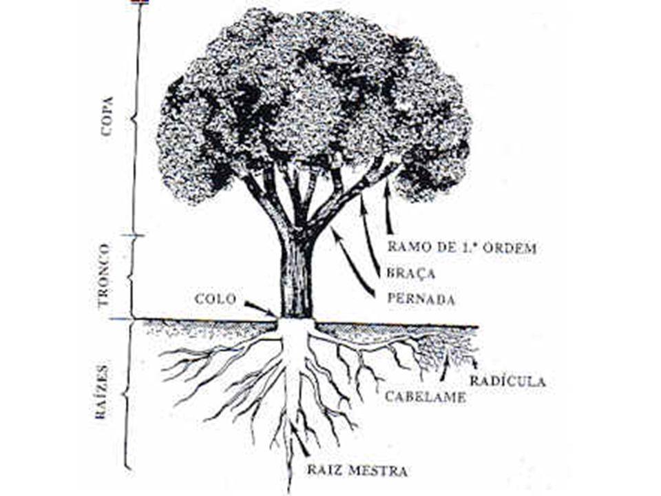 O sobreiro é a única espécie florestal do mundo produtora de cortiça com capacidade para utilização industrial, pois todas as outras produzem cortiça (ou tecido suberoso) mas com características completamente diferentes.