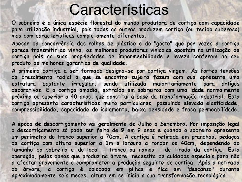 O sobreiro é a única espécie florestal do mundo produtora de cortiça com capacidade para utilização industrial, pois todas as outras produzem cortiça