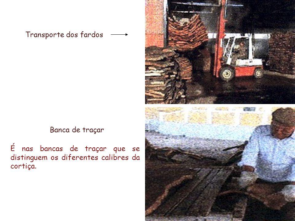 Transporte dos fardos É nas bancas de traçar que se distinguem os diferentes calibres da cortiça. Banca de traçar