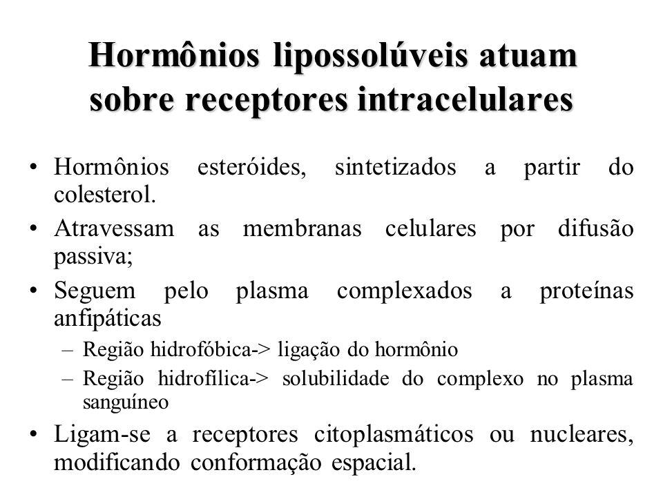 Hormônios lipossolúveis atuam sobre receptores intracelulares Hormônios esteróides, sintetizados a partir do colesterol. Atravessam as membranas celul