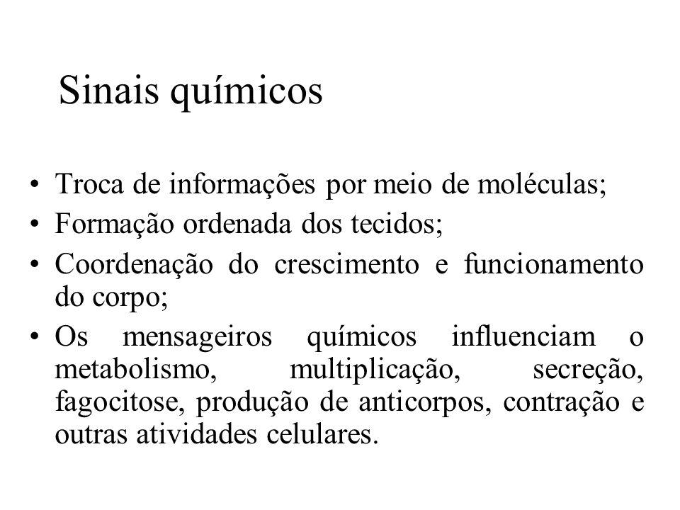 Sinais químicos Troca de informações por meio de moléculas; Formação ordenada dos tecidos; Coordenação do crescimento e funcionamento do corpo; Os men