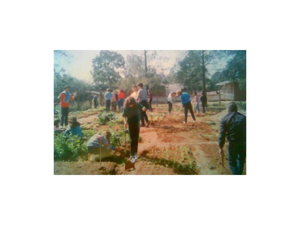 Sopão preparado pela escola era enriquecido pela horta dos alunos.