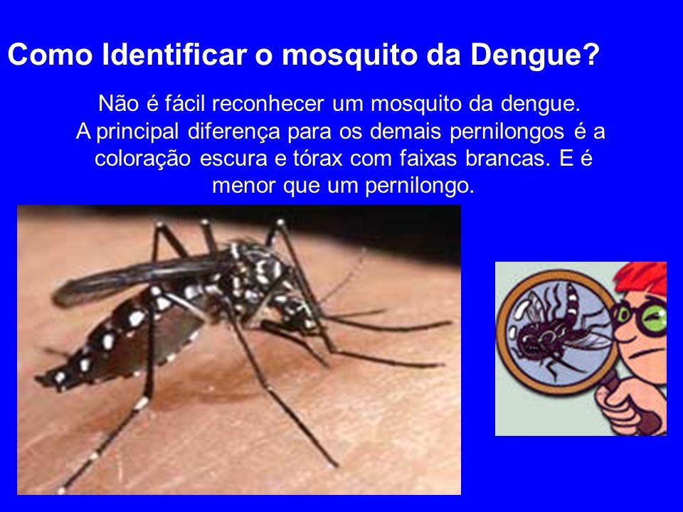 Como Identificar o mosquito da Dengue? Não é fácil reconhecer um mosquito da dengue. A principal diferença para os demais pernilongos é a coloração es