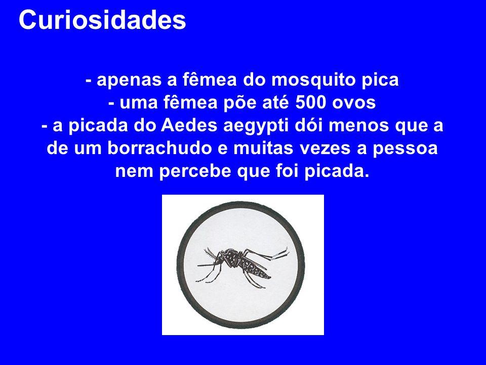 Curiosidades - apenas a fêmea do mosquito pica - uma fêmea põe até 500 ovos - a picada do Aedes aegypti dói menos que a de um borrachudo e muitas vezes a pessoa nem percebe que foi picada.