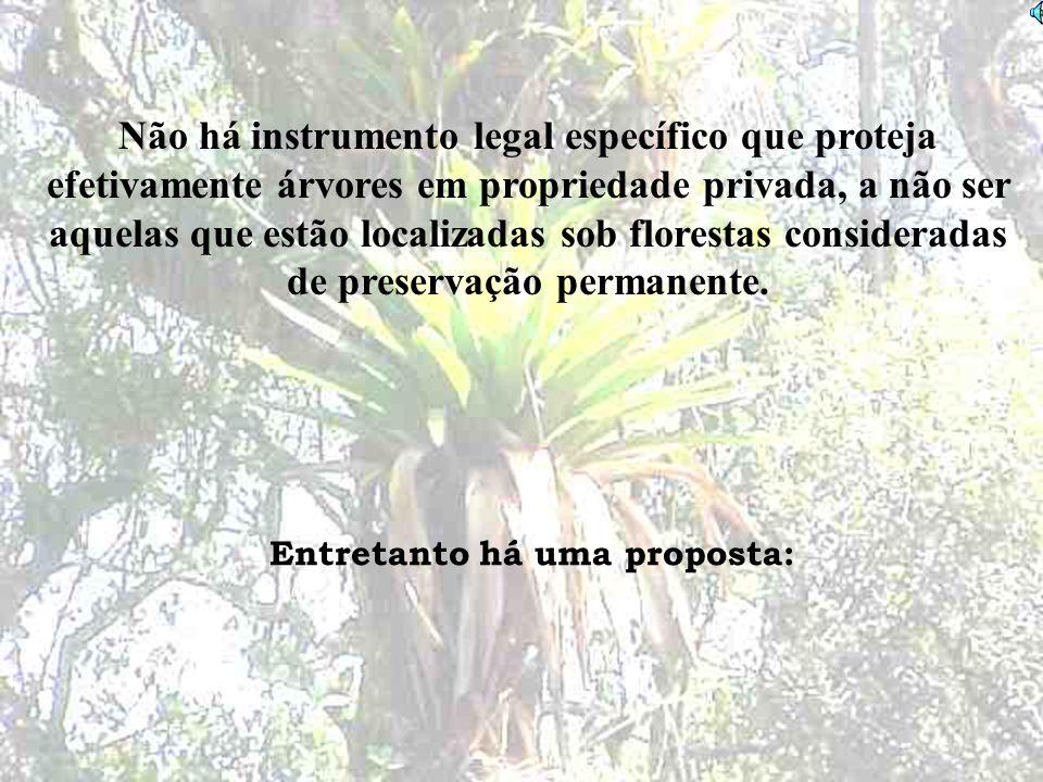 Não há instrumento legal específico que proteja efetivamente árvores em propriedade privada, a não ser aquelas que estão localizadas sob florestas con