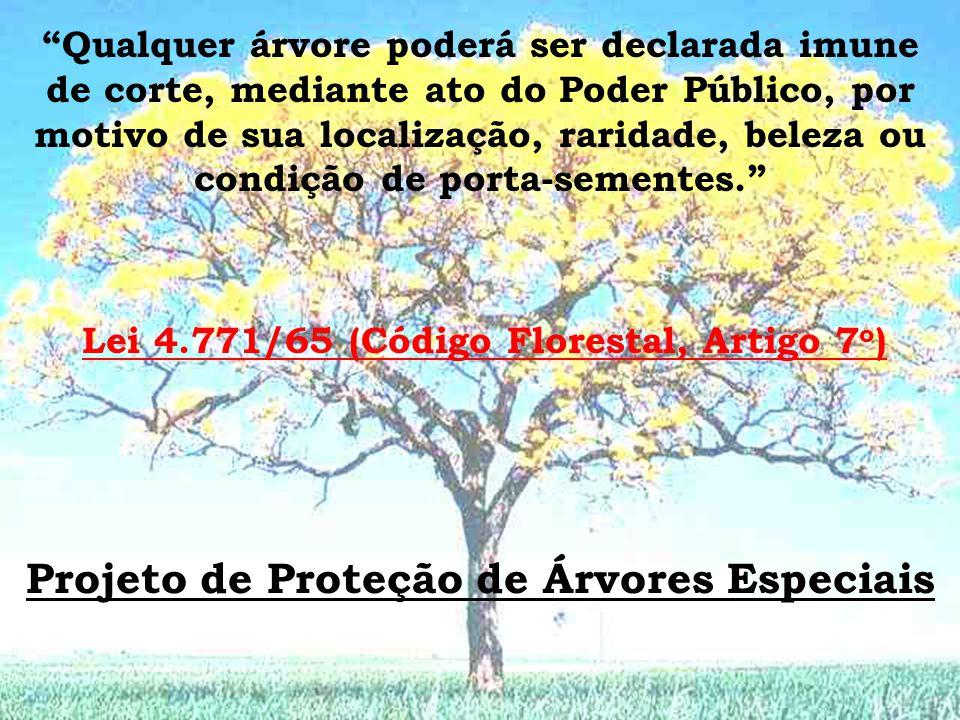 Lei 4.771/65 (Código Florestal, Artigo 7 o ) Qualquer árvore poderá ser declarada imune de corte, mediante ato do Poder Público, por motivo de sua localização, raridade, beleza ou condição de porta-sementes.