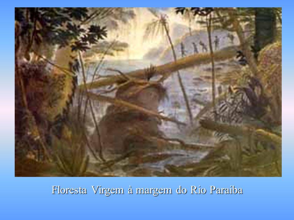 Floresta Virgem à margem do Rio Paraiba