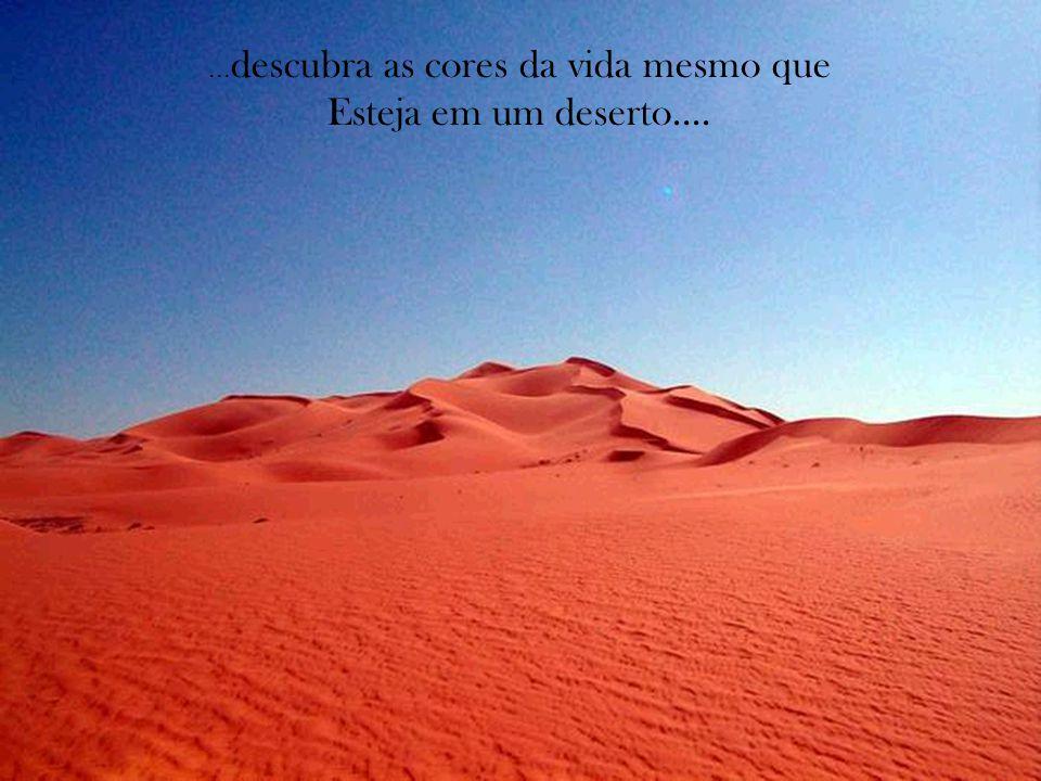 ... descubra as cores da vida mesmo que Esteja em um deserto....