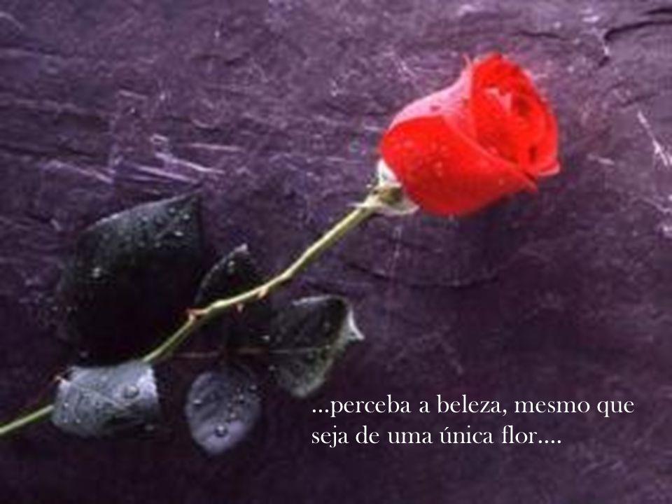 ...perceba a beleza, mesmo que seja de uma única flor....