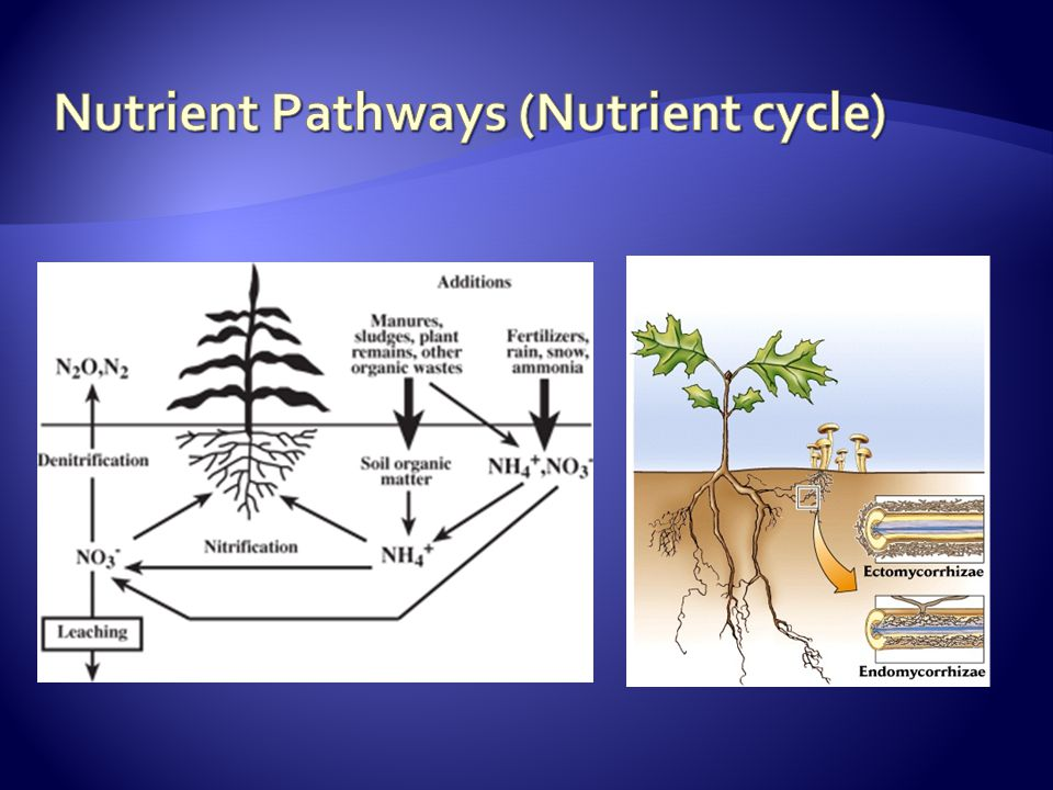 Production of plants is the major role of catchments.