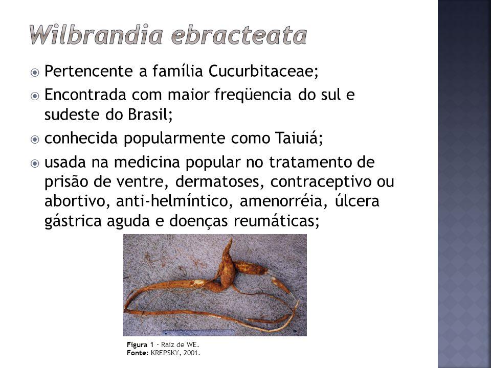 Pertencente a família Cucurbitaceae; Encontrada com maior freqüencia do sul e sudeste do Brasil; conhecida popularmente como Taiuiá; usada na medicina
